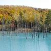 北海道のインスタ映えスポット巡り!美瑛の青い池編 オススメの撮影時間は?