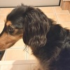 【愛犬こごま物語】僕は、『お見送り&お出迎え犬』