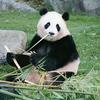 パンダのインフレが発生する和歌山のアドベンチャーワールドで望遠レンズが大活躍でした