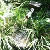 【ホステスの旅行日記】京都 三千院で初夏を満喫するの巻