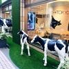 期間限定!北海道から吉祥寺に牛乳専門店がやってきたので牛乳飲み比べてみました!