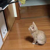 プリンターに興味津々の子猫ちゃん、でも実際にプリントアウトされた瞬間・・・