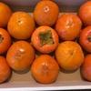 12/1 古里からの柿が送られてきました