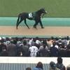東京競馬11R 富士ステークス パドック直前予想 ◎10 ブラックスピネル