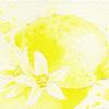 W521 レモンイエロー