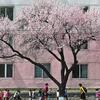 北朝鮮の市民は外国に興味、週休1日制で仕事に展望なし、地域格差も大