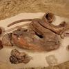 エジプト最古の防腐剤が発見
