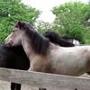誰とでも仲良くなってしまう不思議な馬