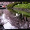 「春の便り」になごり雪:松川べりの桜