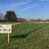 12月10日 学外の畑の様子です