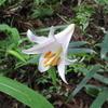7月に登山!涼しい山と7月から見頃を迎える花たち(関西)