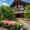 京都・衣笠 - 初夏の花咲く等持院