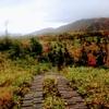 最後の紅葉は雨に煙る【立山黒部アルペンルート:弥陀ヶ原】