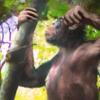 類人猿が樹の上から地上に降りて進化:それは1,200万年前だった!  (BBC-Science & Environment, November 6, 2019)