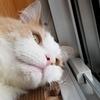 【猫の落下事故】1月の定期健診の報告