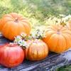 かぼちゃとダイエット微妙な関係!食べていいのか悪いのか、どっち?
