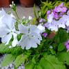 わが家の花たち アパートの花たち