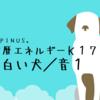白い犬の13日間が始まるよ(^-^)誠実さが大事な期間です!