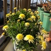 今日から立春 寒い時季でも目を楽しませてくれる花鉢