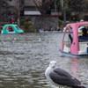 桜の開花宣言がされたので、上野謝恩公園に行ってきた