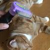 猫の抜け毛対策  ~ファーミネーターのブラシを使った感想~