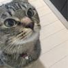子猫に【おすわり】を教える方法