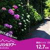 【鎌倉トレランツアー】紫陽花を楽しむ鎌倉メジャートレイル