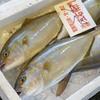 2018年9月27日 小浜漁港 お魚情報