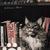 ポスター「企画展示 猫の日」