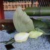 【鎌倉いいね】超早朝鎌倉さんぽ。猛暑の中で咲く八幡様の蓮。