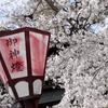 【Youtube】SAKURA 撮rip (April, 2019)