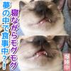 夢の中で食事中!?寝ながらモグモグする子猫よもぎ!【動画】