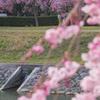 姫路城で一眼レフカメラ練習! お花見は写真練習に最適だった!