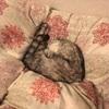 猫と布団と毛