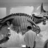 国立科学博物館をモノクロフィルムで撮った