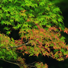 【写真修復・復元・複製・複写の専門店】紅葉の葉