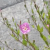 雑草の花のかわいらしさよ。