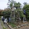 昭和祭に続いて境内奉仕作業。