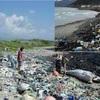 今 海の汚染が、すごいことになってます