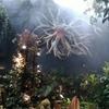 【雑記】シンガポール記録 植物園