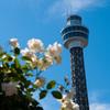 バラの香りをまとえる、港の見える丘公園と山下公園