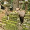奈良「春日大社/東大寺/二月堂」鹿もいます