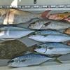 いろいろ釣れて「ザ・高級食材」って感じになりました🎵 【  日本海ジギング 】