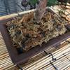 盆栽鉢からの用土流出を防ぐミズゴケ