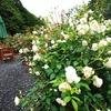 【三重】薔薇の花が綺麗なペンション
