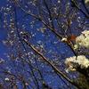 散歩の途中でみつけた冬桜