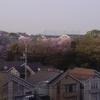 週末は桜を見に行こうと思います。大阪でオススメのスポットは勝尾寺のようですが・・・