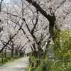 2021年桜の花見散歩(水道みち) 県営尾張広域緑道・春日井市・国道19号から地蔵川まで