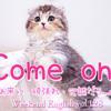 【週末英語#128】英語であいづちを打つときに使える「Come on!」実はいろんな意味がある