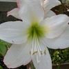 雨が似合う花たち